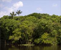 deficiencias na governancia de fundos ambientais - Deficiências na governança de fundos ambientais e florestais no Pará e Mato Grosso