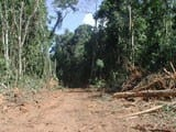 artigocie34 - Loggers and forest fragmentation: behavioral models of road building in the Amazon basin.