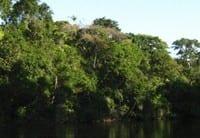para 85 novo codigo - Para 85%, novo Código Florestal deve priorizar florestas e rios.