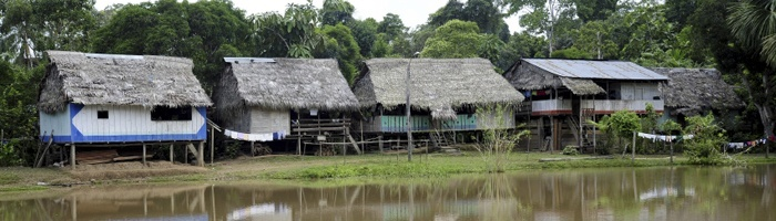 Floresta E Comunidade - Forest and Community