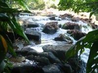 a impunidade de infratores ambientais - A Impunidade de Infratores Ambientais em Áreas Protegidas da Amazônia