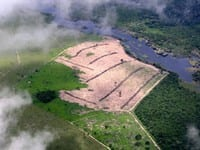 challenges for the environmental - Challenges for the Environmental Crimes Law in Pará.