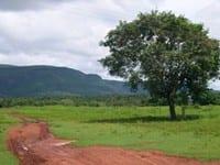 deforestation in land - Deforestation in Land Reform Settlements in the Amazon.