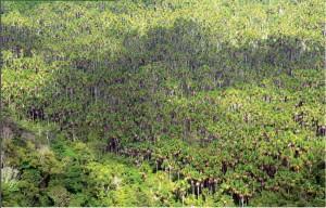 image 21 300x192 - Plano de Manejo da Floresta Estadual de Trombetas