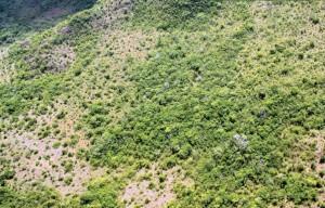 image 22 300x192 - Plano de Manejo da Floresta Estadual de Trombetas