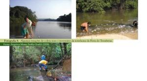 image 50 300x166 - Plano de Manejo da Floresta Estadual de Trombetas
