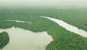 image84 300x172 - Resumo Executivo do Plano de Manejo da Floresta Estadual do Paru