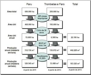 potencial economico6 300x246 - Potencial Econômico nas Florestas Estaduais da Calha Norte