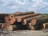 wood as economic - Wood as economic catalystic to ecological change in Amazonia.