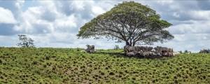 foto 01 300x120 - Como melhorar a eficácia dos acordos contra o desmatamento associado à pecuária na Amazônia?