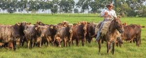 foto 02 300x120 - Como melhorar a eficácia dos acordos contra o desmatamento associado à pecuária na Amazônia?
