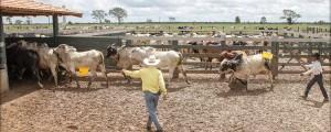 foto 03 300x120 - Como melhorar a eficácia dos acordos contra o desmatamento associado à pecuária na Amazônia?