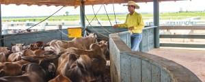 foto 04 300x120 - Como melhorar a eficácia dos acordos contra o desmatamento associado à pecuária na Amazônia?
