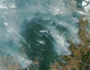 img01 300x233 - Como reduzir a contribuição da pecuária brasileira para as mudanças climáticas?
