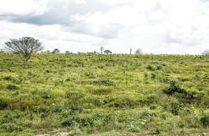 img02 300x196 - Como reduzir a contribuição da pecuária brasileira para as mudanças climáticas?