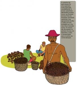 castanha do para 271x300 - A floresta habitada: História da ocupação humana na Amazônia