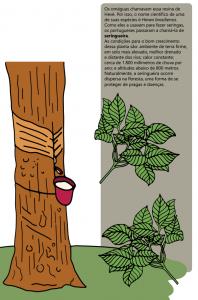 seringueira 198x300 - A floresta habitada: História da ocupação humana na Amazônia