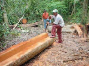 iniciativa MFC 300x225 - Manejo Florestal Comunitário: processos e aprendizagens na Amazônia brasileira e na América Latina