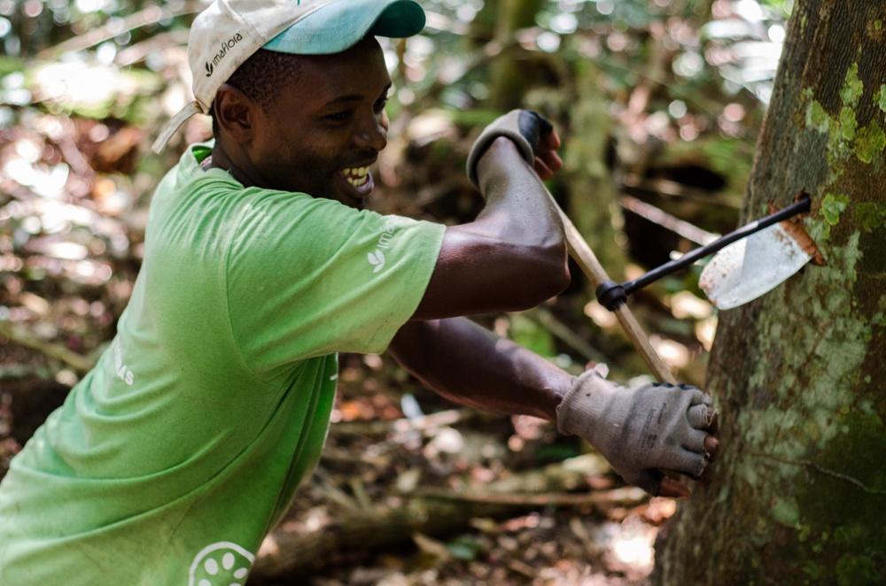 AlexFisberg PTS 17 7781 - Fortalecimento da Gestão Ambiental na Amazônia
