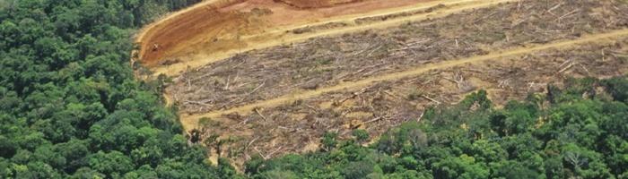 Monitoramento da Amazonia