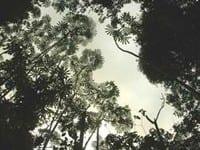 artigocie1 - A behavioral model of landscape change in the Amazon basin: the colonist case.