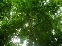 bosque_para_siempre