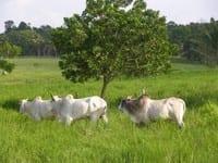 como desenvolver a economia rural - Como desenvolver a economia rural sem desmatar a Amazônia?