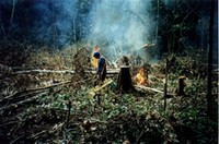 ecological aspects - Ecological aspects of forest degradation by logging and fire in eastern Amazon.