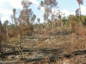 floresta_queimanda