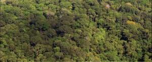 image 19 300x123 - Plano de Manejo da Floresta Estadual de Trombetas