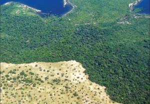 image 23 300x208 - Plano de Manejo da Floresta Estadual de Trombetas