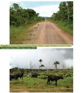 image 24 267x300 - Plano de Manejo da Floresta Estadual de Trombetas