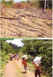 image 98 209x300 - Plano de Manejo da Floresta Estadual de Trombetas