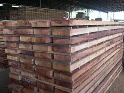 image - Zoneamento Ecológico-Econômico do Acre: Atividade Madeireira