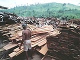 reducing waste during1 - Reducing waste during logging and log processing: forest conservation in eastern Amazonia.