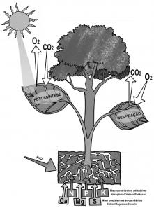 CO2_O2
