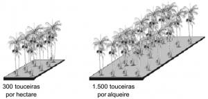acai_densidade
