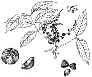 Elegante Em Forma De Flor Mangueira Madeira Com Tigela mancha escura