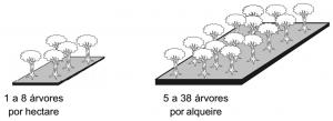 andiroba_densidade