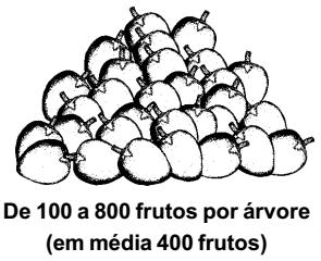 bacuri_producao