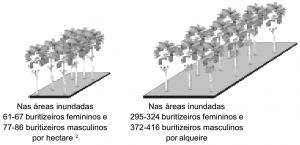 buriti_densidade
