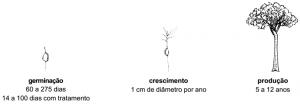 castanheira_manejo