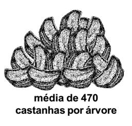 castanheira_producao