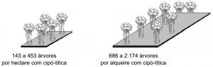 cipo_densidade