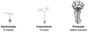 cipo_manejo