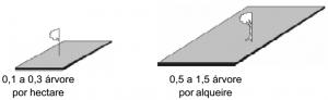 ipe_densidade