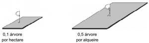 mogno_densidade