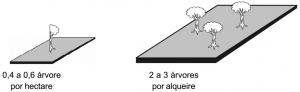 piquia_densidade
