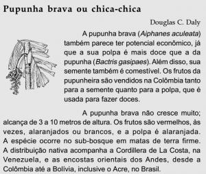 pupunha_brava