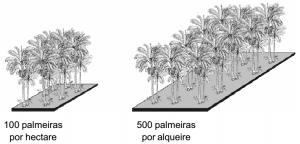 pupunha_densidade